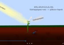 Taime kasvamise animatsioon